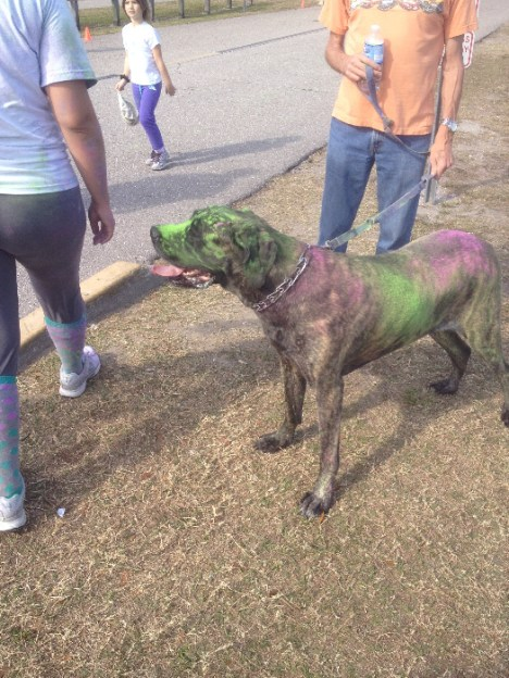 dog in color dye