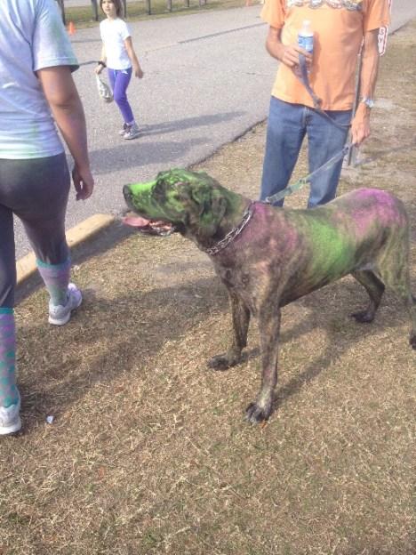 dog in color dye