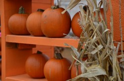 PumpkinPatch 038