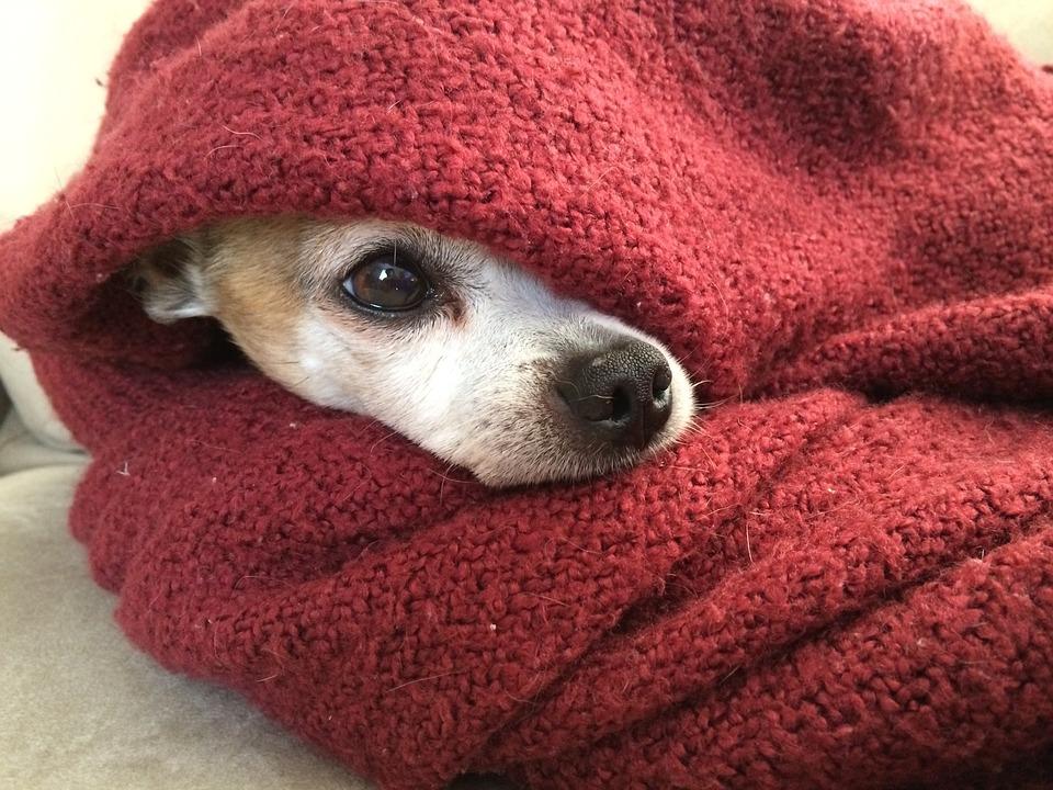 Image result for dog in blanket