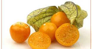 Health Benefits of Golden Berries