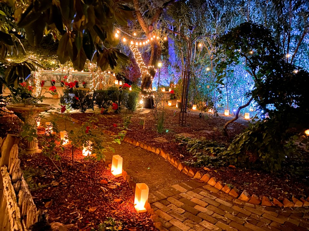 luminary nights at the tucson botanical gardens