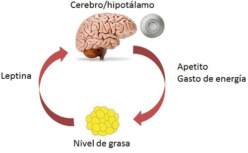 ciclosetpoint