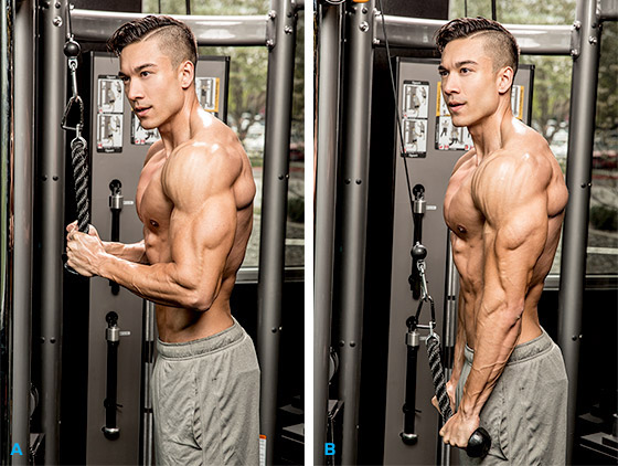 Triceps Pushdown Rope Fitness Stars