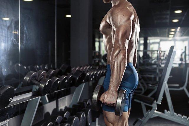 muscle-building.jpg