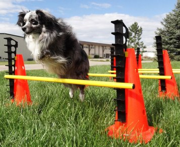 FitPAWS Hurdle_Action