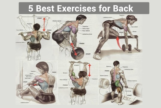 5 Best Exercises for Back