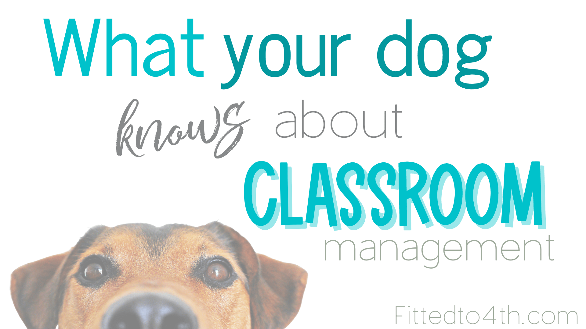 What your dog knows about classroom management.