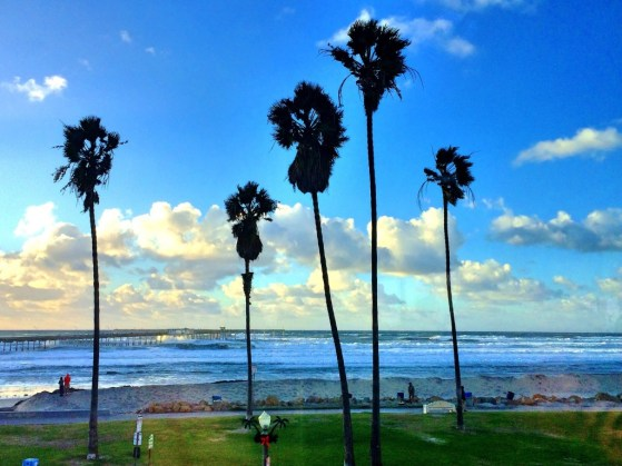 weekend guide to san diego palm trees