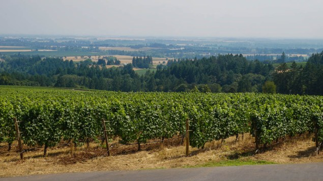 wineries to visit in the willamette valley De Ponte Cellars