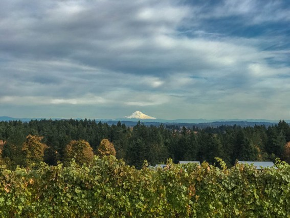 Wineries to visit in Oregon Wine Country Fittwotravel.com
