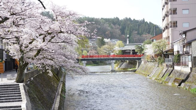 2 weeks in Japan itinerary Takayama cherry blossoms