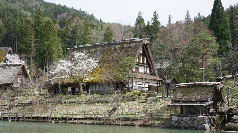 shirakawago tour from takayama