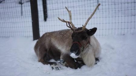 reindeer farm leavenworth washington