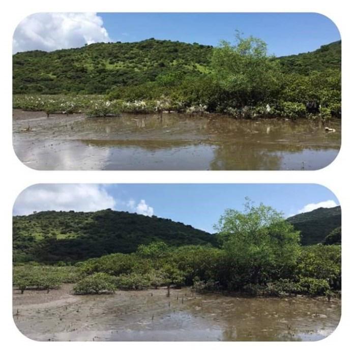 泥灘清理前後對比(圖片來源:綠惜地球)