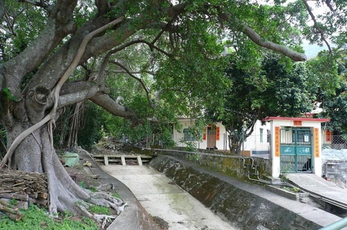 [香港奇景] 香港古樹巨木 沙螺灣古樹