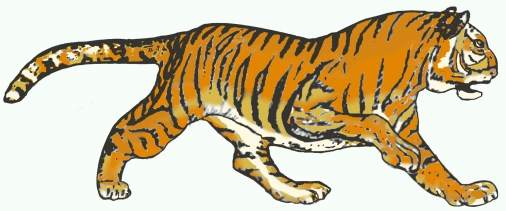 graphic tiger for strength and power