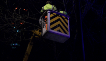 Xmas lights being removed from ash tree in Charlotte Street