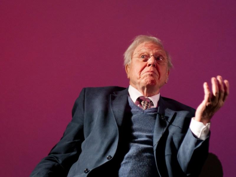 David Attenborough, sitting.