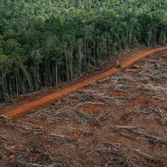PT Megakarya Jaya Raya (PT MJR) Oil Palm Concession in Papua