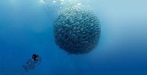 La rivincita del pesce azzurro
