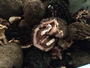 Black Walnuts: A Forager's Treat