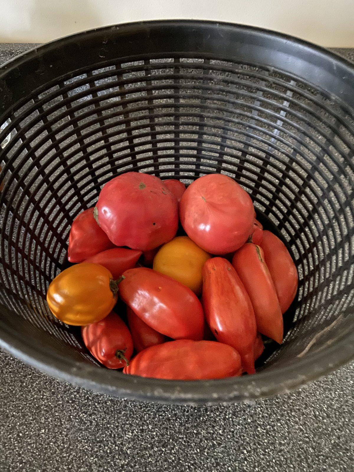 Tomatoes in November?