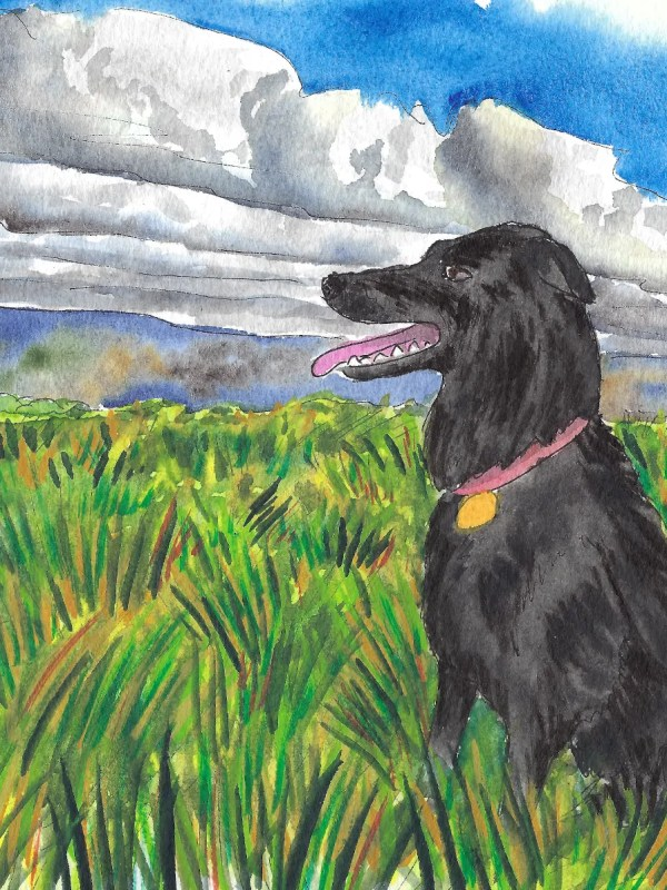 Watercolor painting of grass field and dog.