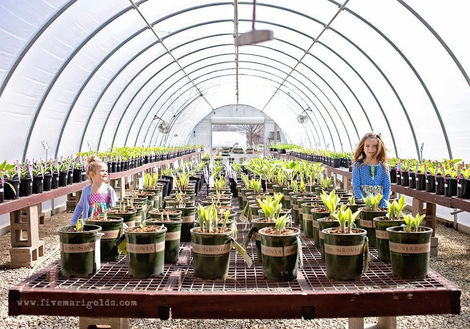 Building an 18-year Mother's Day Flower Garden | Five Marigolds #GrowBeautifully #Monrovia Plants #sponsored