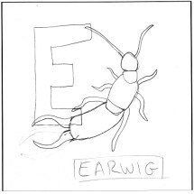 e-is-for-earwig