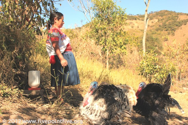World Vision taught skills in rearing turkeys and chickens
