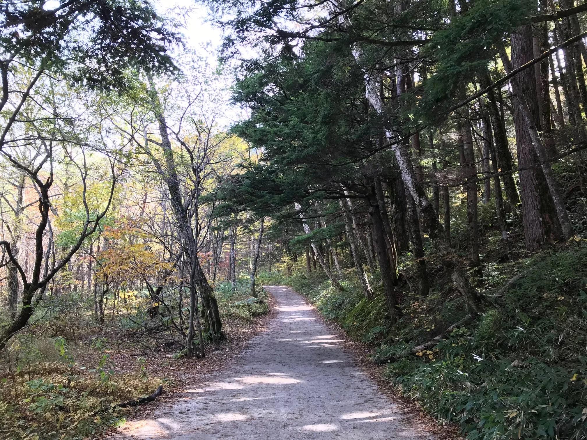 河辺林と針葉樹林
