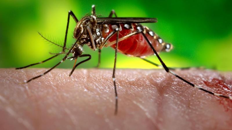 Why you are completely punctured by mosquitoes (and your partner is not)