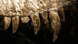 Bacteria in a Dinosaur Bone Reignite a Heated Debate