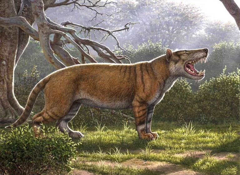 Scientists discover largest carnivorous mammal ever
