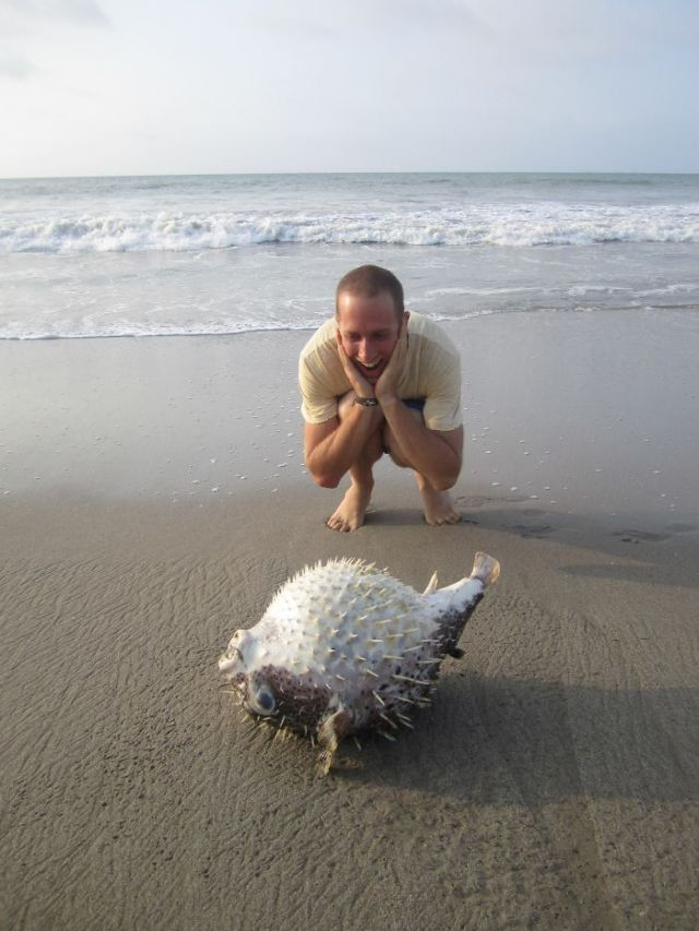 Finding A Stranded Puffer Fish On The Shores