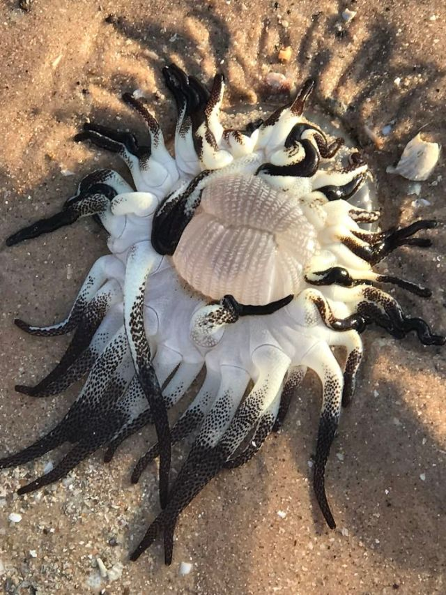 Mother And Girlfriend Found This On The Beach. Any Idea What It Is?