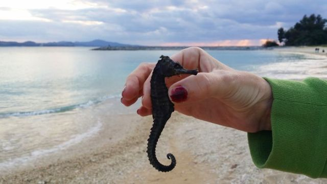 Found A Dried Seahorse On The Beach