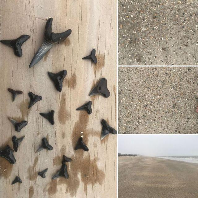Finding Sharks Teeth, Like A Needle In A Haystack. Crystal Beach, Tx.
