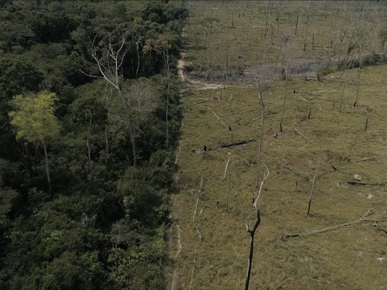 The Amazon rainforest is in trouble. Again.