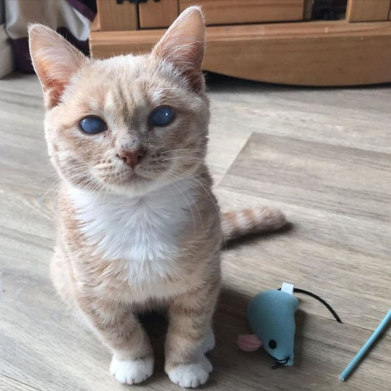 This Cat With Dwarfism Will Be Kitten-Sized Forever
