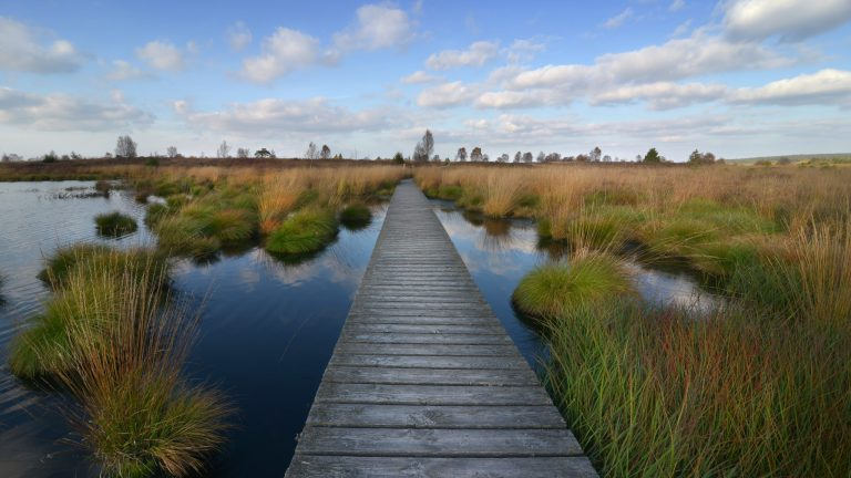 Scientists record rapid carbon loss from warming peatlands
