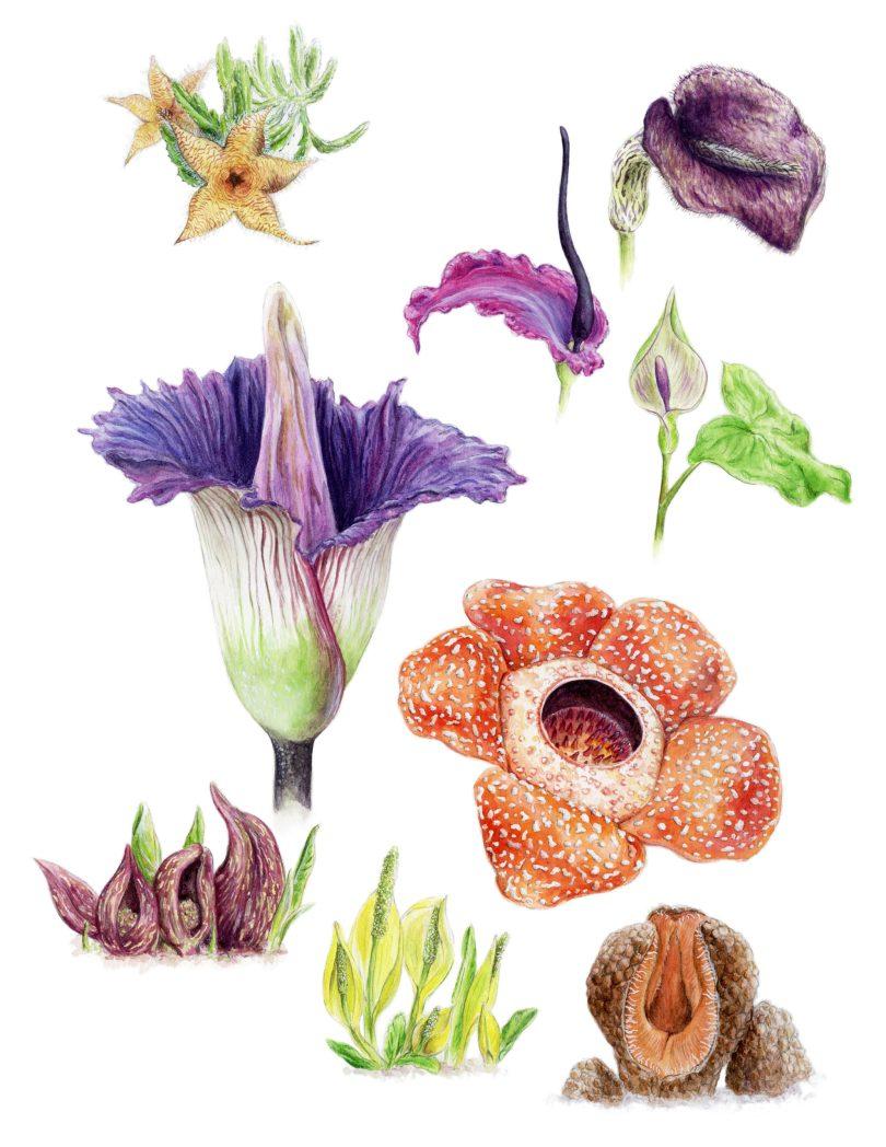 Stinky Plants by Daisy Chung