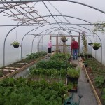 polytunnel 24 x 56 , 9 hoops, 6 crop bar sets