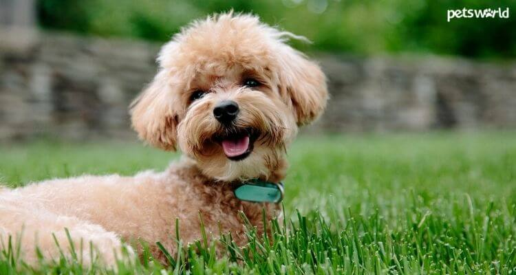 Best Dogs for Small Apartments in India