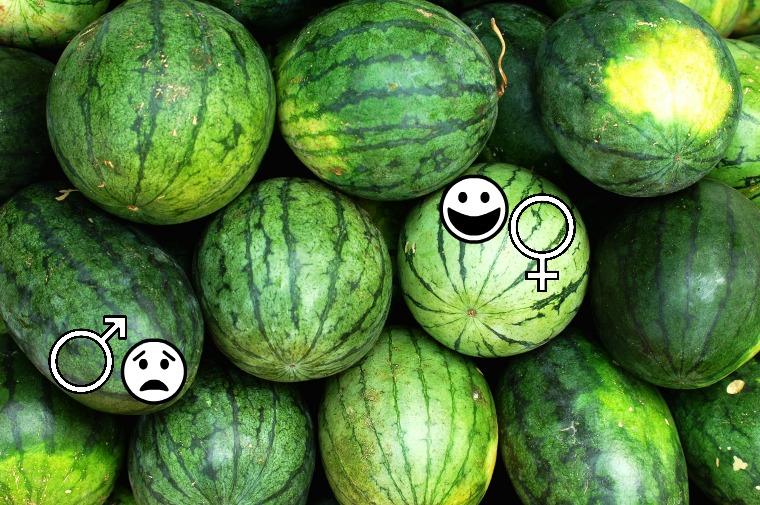 vattenmelon-9-jpg.jpg