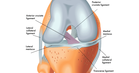Whats Missing with ACL Rehab? The prehab guys