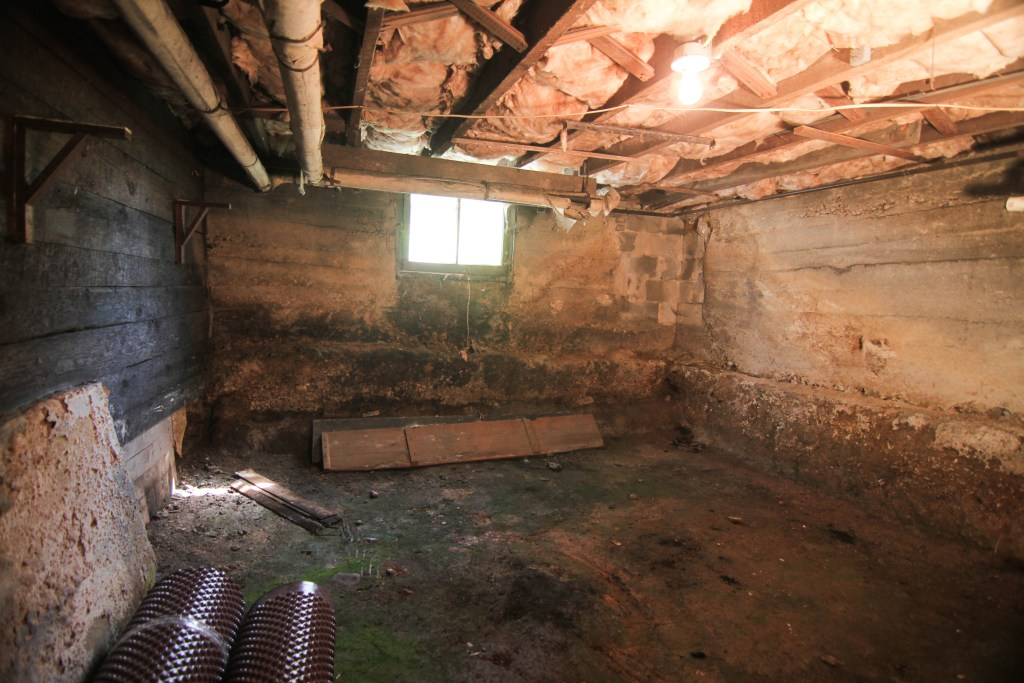 Basement with wet moldy insulation