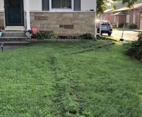 A Practical Lawn Health Checklist for Every Homeowner