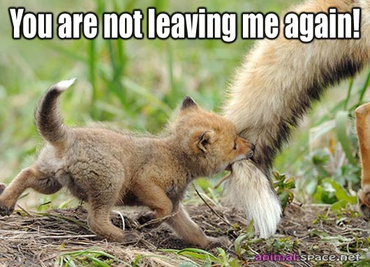 Funny animals here again (7)